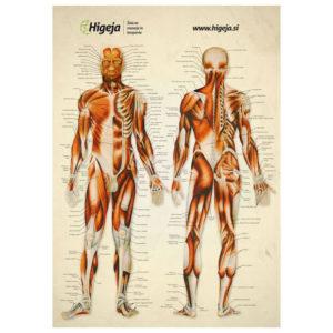 Poster mišic