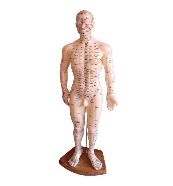 Model moškega